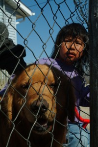An Ojibwe girl and a local dog peer at village guests through a wire fence